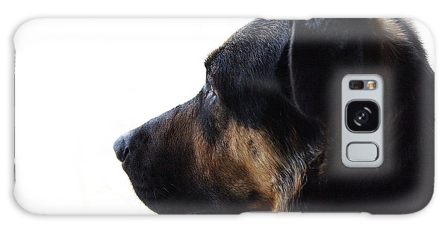 Dog Galaxy S8 Case featuring the photograph Doggie Daydreams by Jeff Galbraith