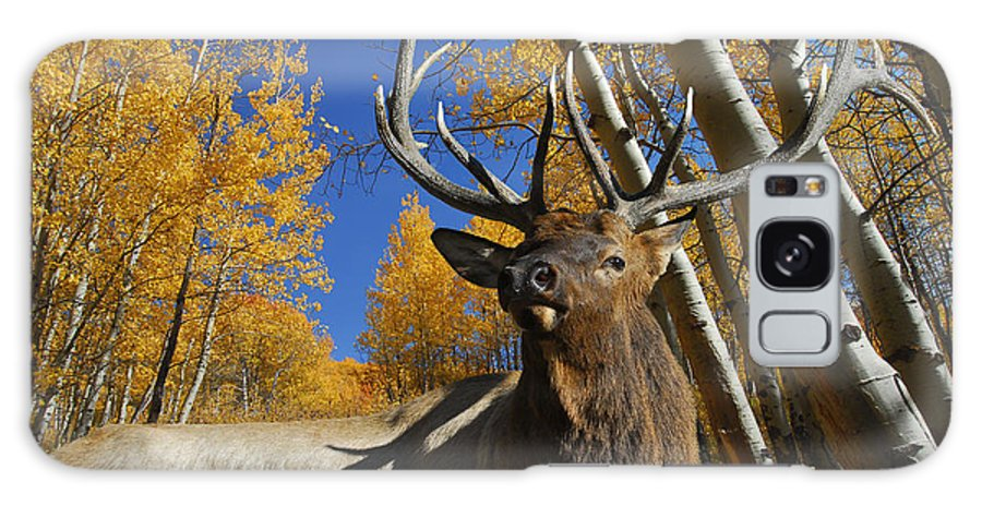 Rocky Mountain Elk Galaxy S8 Case featuring the photograph Dominator by Michael Bartlett