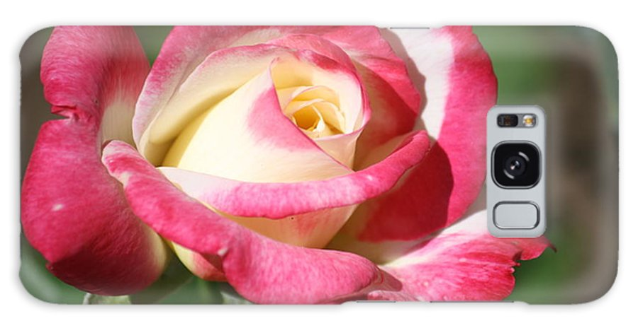 Double Delight Galaxy S8 Case featuring the photograph Double Delight Rose by Donna G Smith