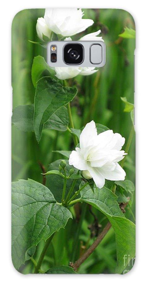 Jasmine Galaxy S8 Case featuring the photograph Double Jasmine In Bloom by Ausra Huntington nee Paulauskaite
