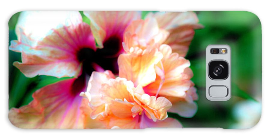 Hibiscus Galaxy S8 Case featuring the photograph Double Peach Hibiscus Five by Ken Frischkorn