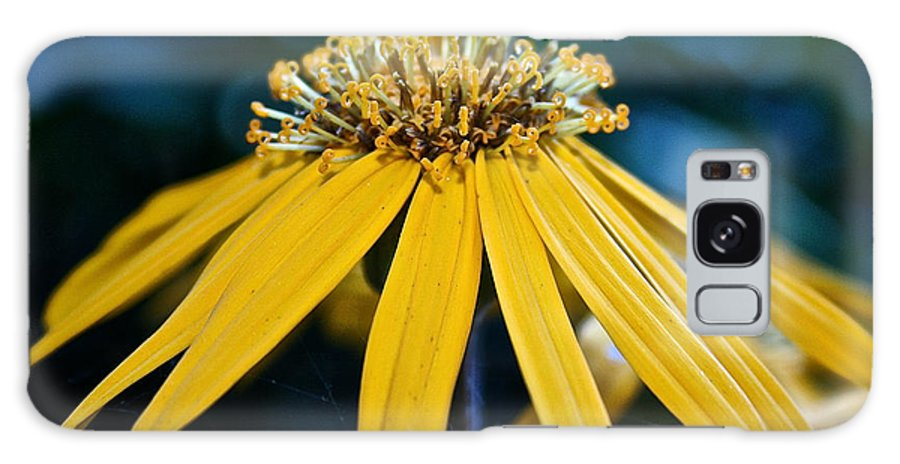 Outdoors Galaxy S8 Case featuring the photograph Double Yellow by Susan Herber
