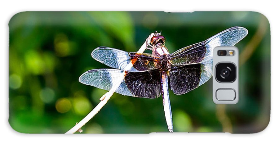 Dragonfly Galaxy S8 Case featuring the photograph Dragonfly 0002 by Barry Jones