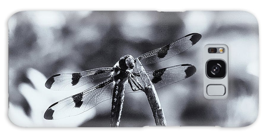 Dragonflly Galaxy S8 Case featuring the photograph Dragonfly In The Sun by Susan Capuano