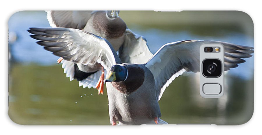 Air Galaxy S8 Case featuring the photograph Dramatic Ducks by Andrew Michael