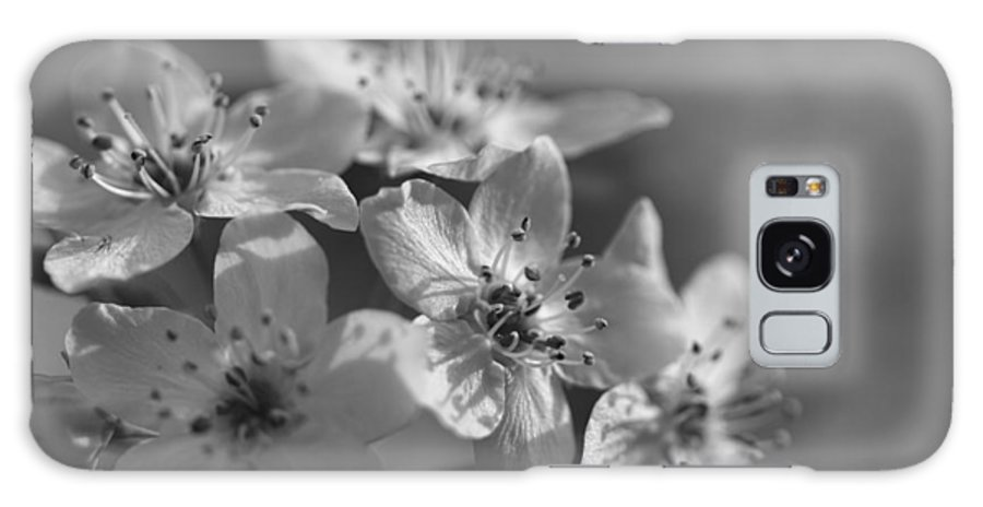 Bradfore Galaxy S8 Case featuring the photograph Dreamy Spring Blossoms In Black And White by Kathy Clark