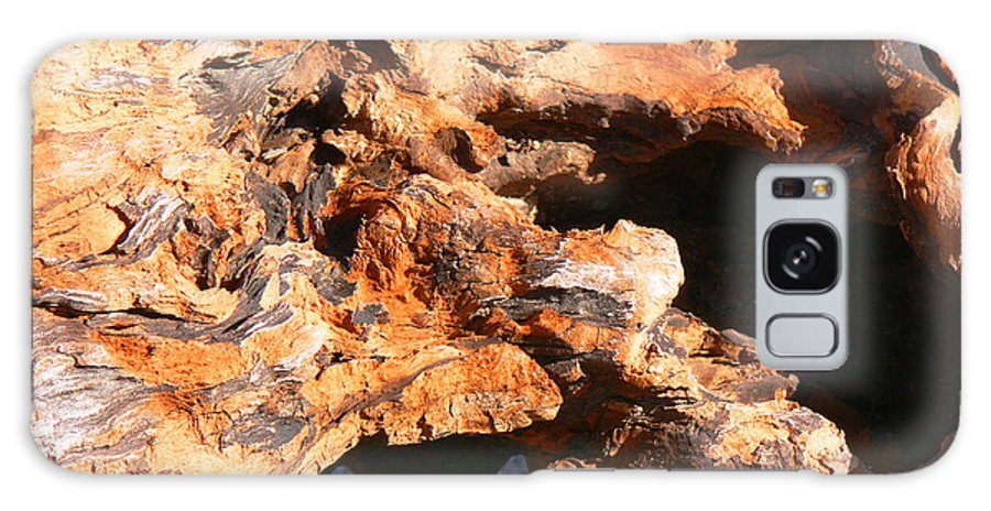 Tn Galaxy S8 Case featuring the photograph Driftwood 2 by Ericamaxine Price