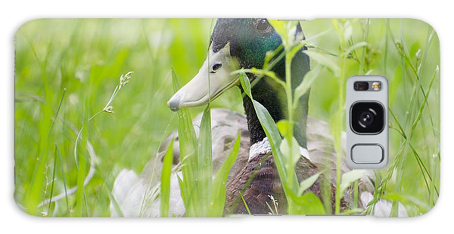 Duck Galaxy S8 Case featuring the photograph Duck In The Green Grass by Mats Silvan