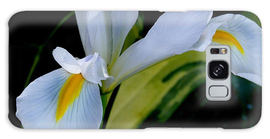 Iris Galaxy S8 Case featuring the photograph Dutch Iris by Dianne Phelps