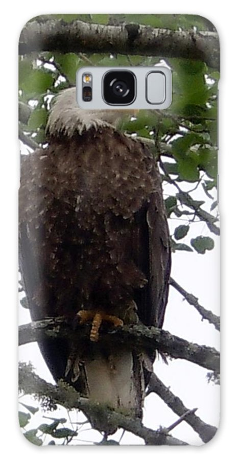 Photography Galaxy S8 Case featuring the photograph Eagle At Hog Bay Maine by Francine Frank