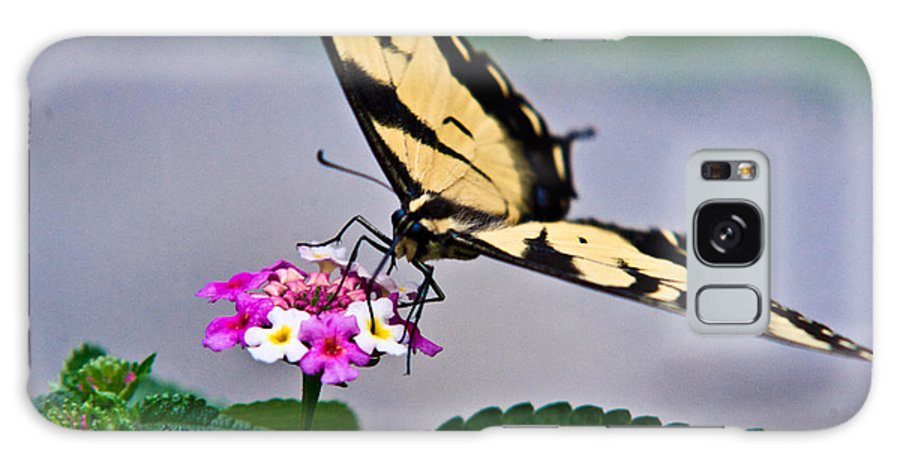 Eastern Galaxy S8 Case featuring the photograph Eastern Tiger Swallowtail 5 by Douglas Barnett