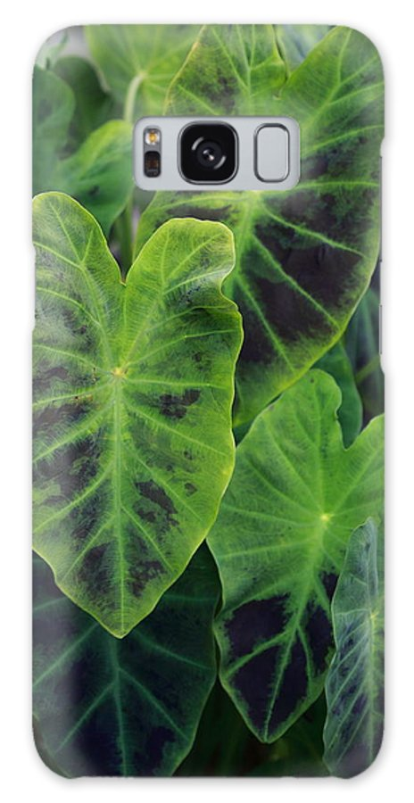 Plant Galaxy S8 Case featuring the photograph Emerald Leaves by Paul Slebodnick