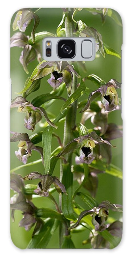 Broad-leaved Helleborine Galaxy S8 Case featuring the photograph Epipactis Helleborine by Bob Gibbons