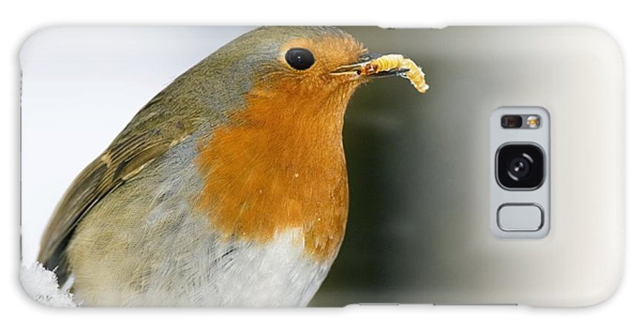 European Robin Galaxy S8 Case featuring the photograph European Robin Feeding On A Mealworm by Duncan Shaw