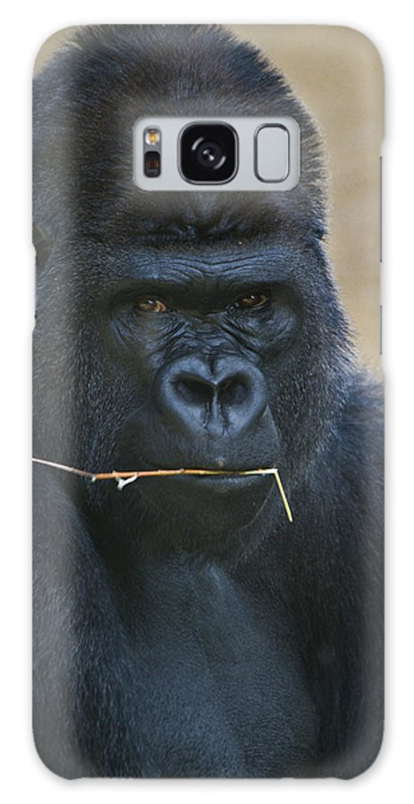 Animals Galaxy S8 Case featuring the photograph Eye Contact by Roger Mullenhour