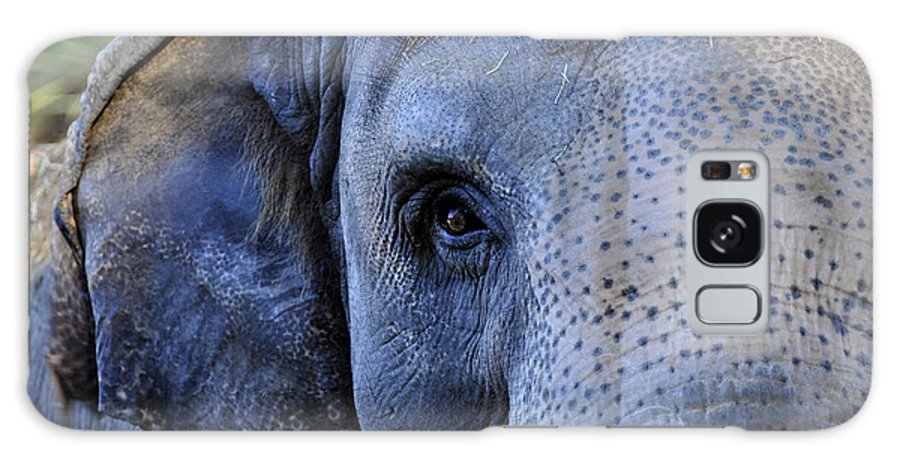 Fine Art Photography Galaxy S8 Case featuring the photograph Eye Of The Elephant by David Lee Thompson