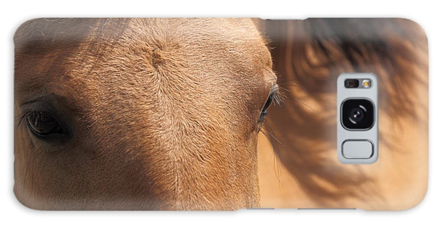 Animal Galaxy S8 Case featuring the photograph Eyes Of A Brown Horse by Tilen Hrovatic