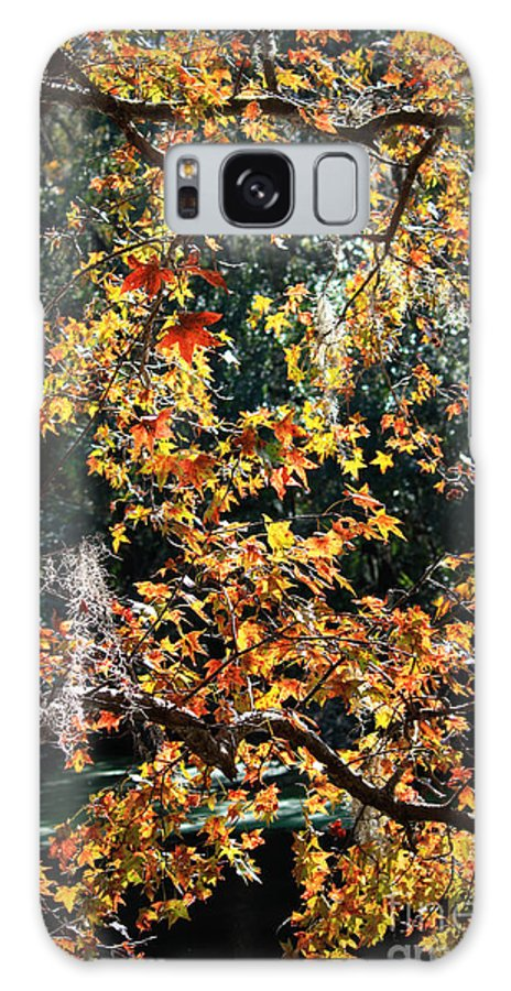 Fall Leaves Galaxy S8 Case featuring the photograph Fall Leaves Over Florida Pond by Carol Groenen