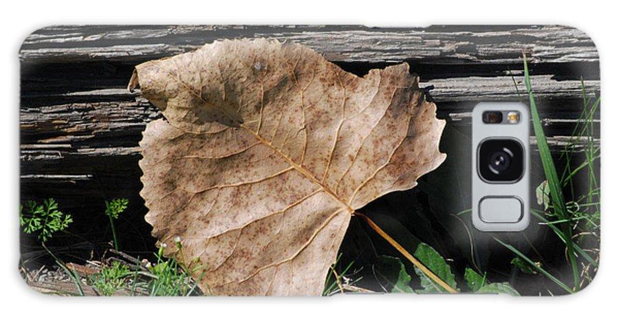 Leaf Galaxy S8 Case featuring the photograph Fallen Leaf by Grace Grogan