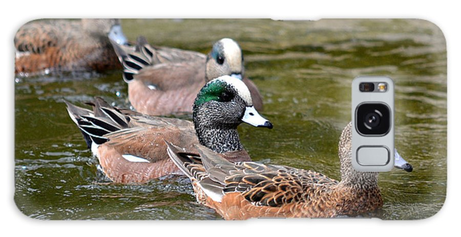 American Wigeons Galaxy S8 Case featuring the photograph Family Of Four by Fraida Gutovich