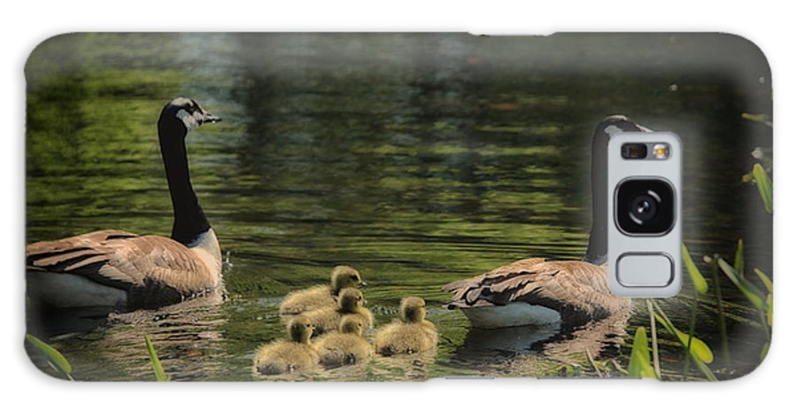 Canadian Geese Galaxy S8 Case featuring the photograph Family Outing by Karol Livote