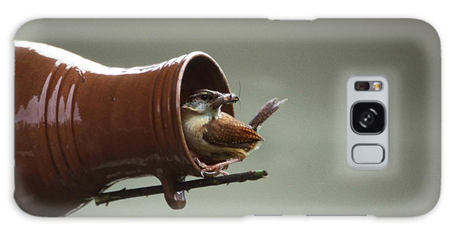 Wren Galaxy S8 Case featuring the photograph Feeding Time by Skip Willits
