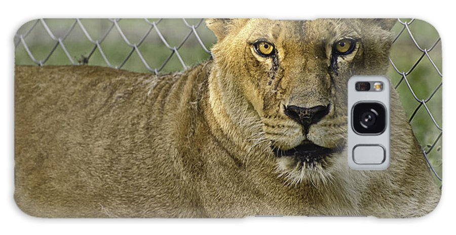 Animals Galaxy S8 Case featuring the photograph Female Lion by Melany Sarafis