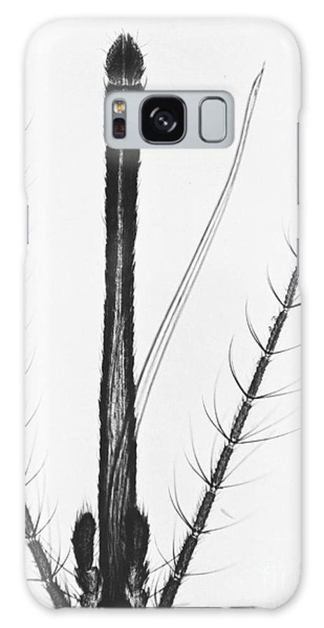 Mosquito Galaxy S8 Case featuring the photograph Female Mosquito Proboscis by Eric V. Grave
