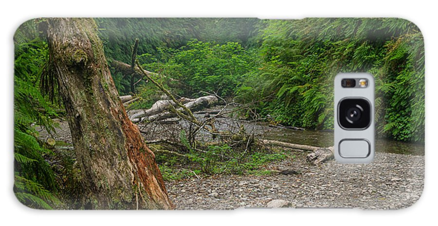 Fern Canyon Galaxy S8 Case featuring the photograph Fern Canyon Trunk by Greg Nyquist
