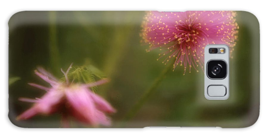 Fern Galaxy S8 Case featuring the photograph Fern Touch-me-not by Garry McMichael