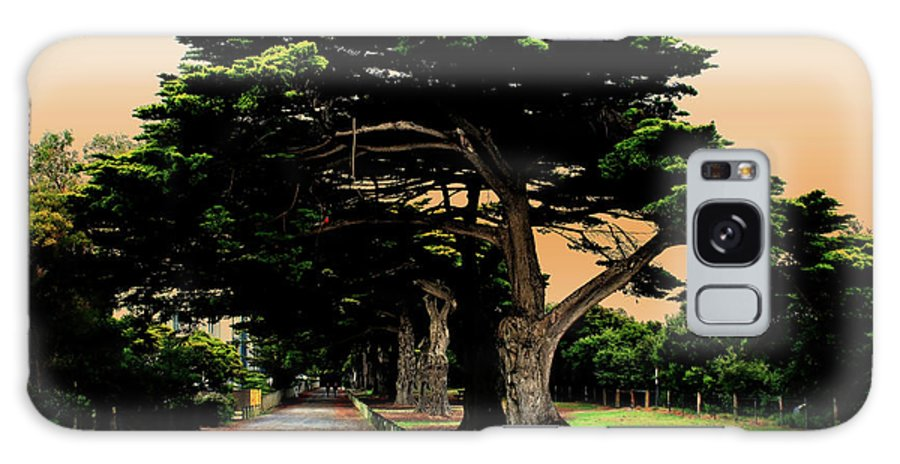 Fig Trees Galaxy S8 Case featuring the photograph Fig Tree Lane by Douglas Barnard