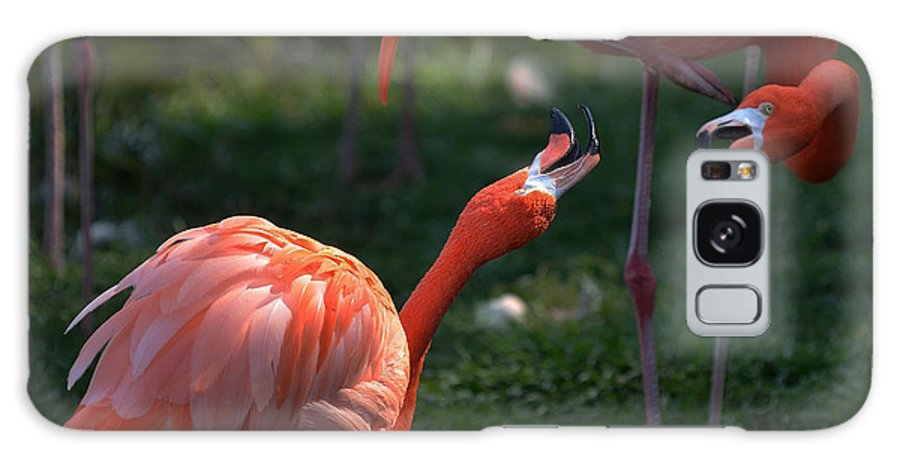 Photo Galaxy S8 Case featuring the photograph Flamingos Fight by Dragan Kudjerski