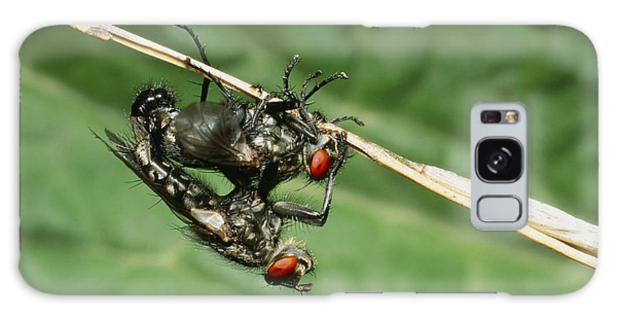 Insect Galaxy S8 Case featuring the photograph Flies Mating by Dr George Beccaloni