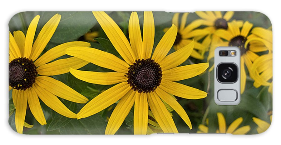 Black-eyed Susan Galaxy S8 Case featuring the photograph Floral Sunshine by Arlene Carmel