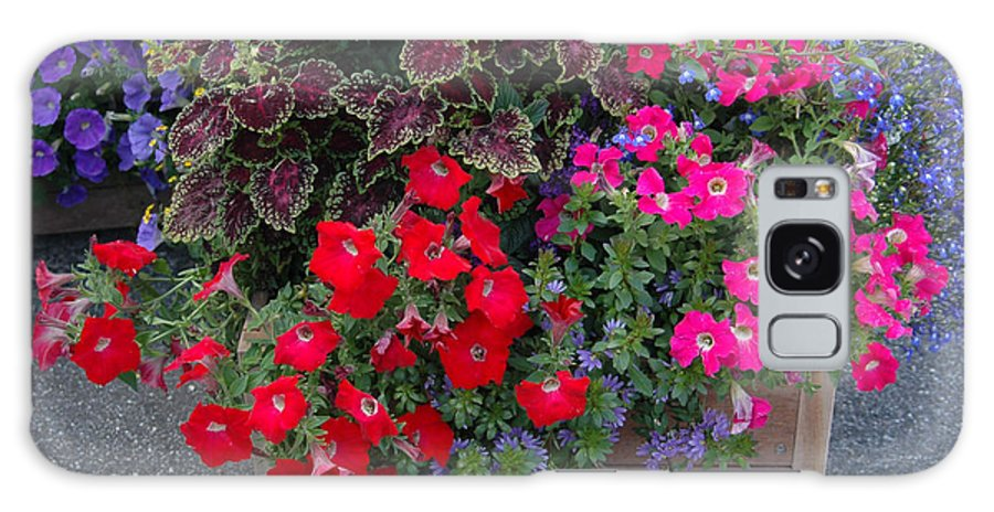 Flowers Box Wooden Red Color Violet Leaves Combination Bouquet Decoration Plants Galaxy S8 Case featuring the photograph Flower Box by Vilas Malankar