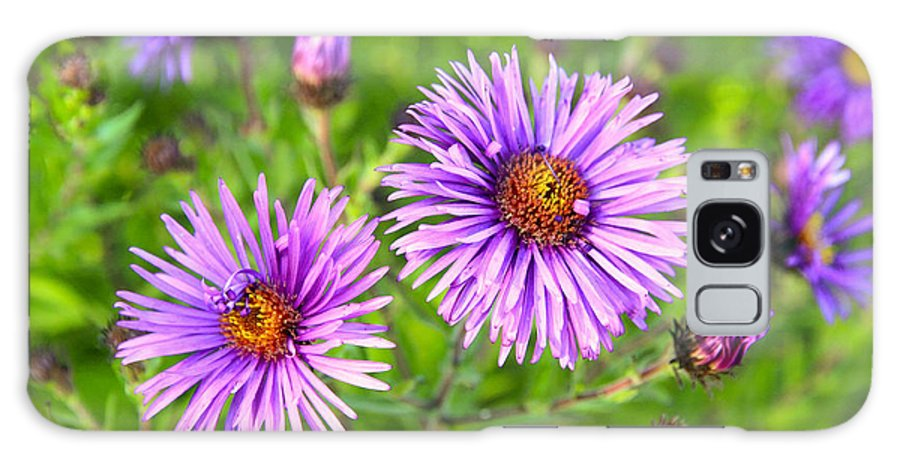 Flowers Galaxy S8 Case featuring the photograph Flower Mania by Steve McKinzie