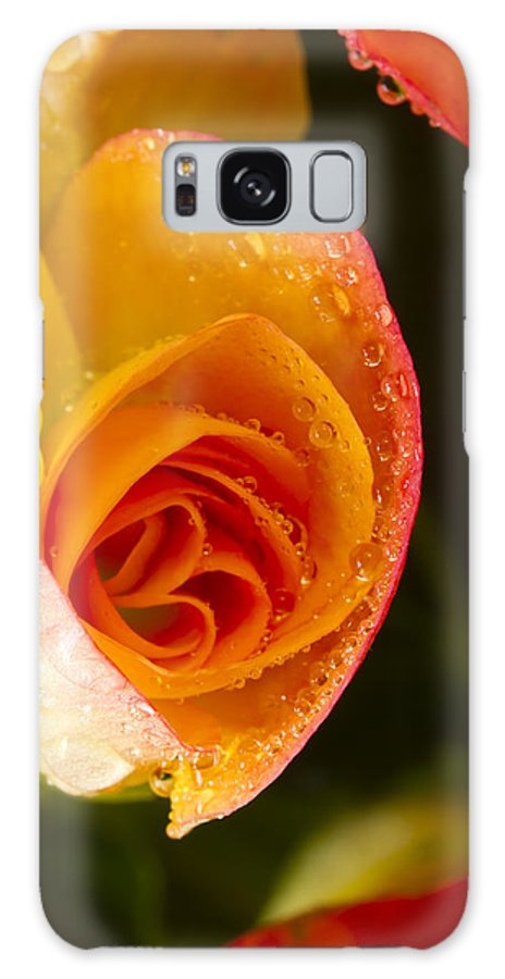 Bright Galaxy S8 Case featuring the photograph Flower Rieger Begonia 5 by John Brueske