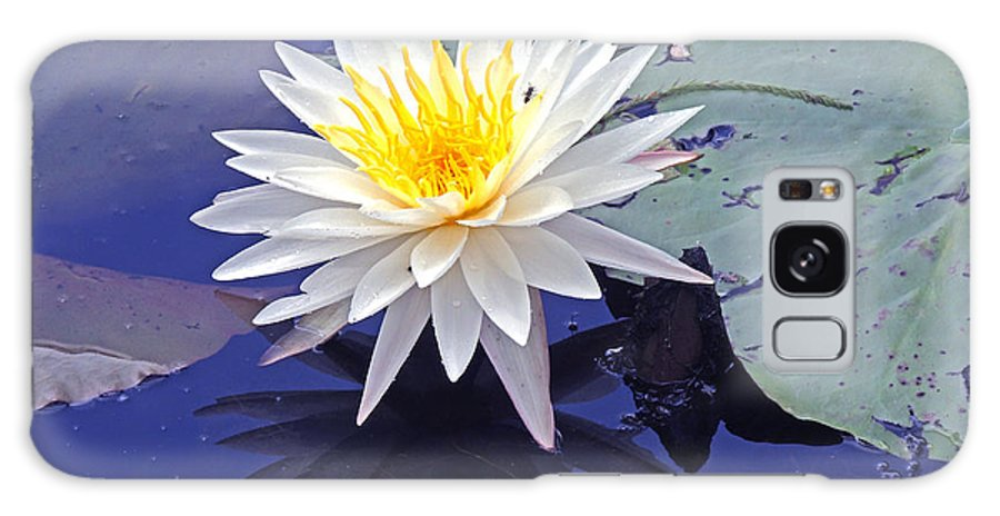 Lily Pads Galaxy S8 Case featuring the photograph Flowering Lily-pad- St Marks Fl by Marilyn Holkham