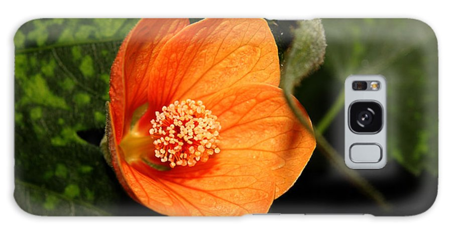 Nature Galaxy S8 Case featuring the photograph Flowering Maple Singe Flower by Robert Morin