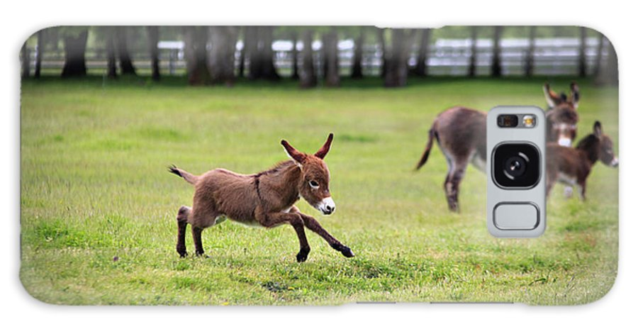 Miniature Donkey Galaxy S8 Case featuring the photograph Flying Abbey by Tiana McVay