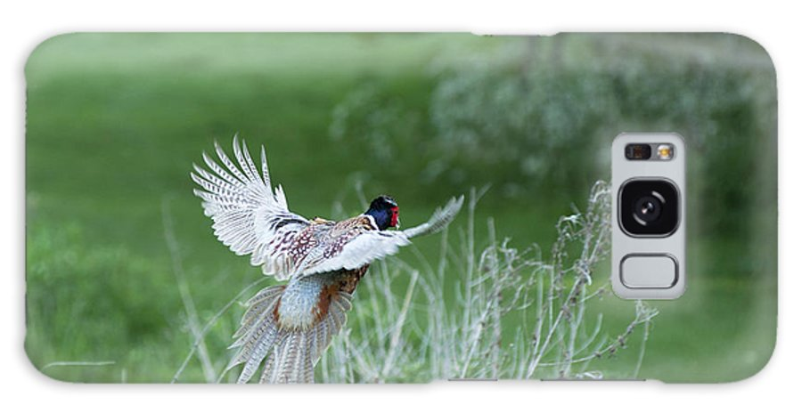 2011 Galaxy S8 Case featuring the photograph Flying Pheasant by Andrew Michael