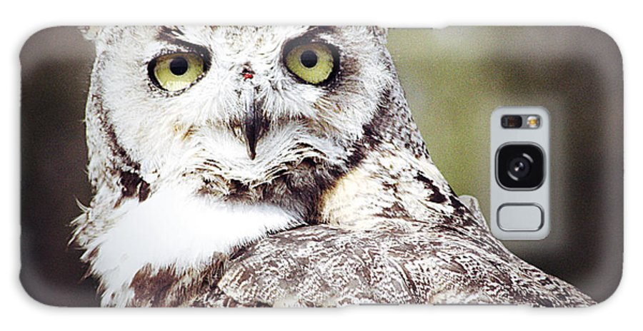 Elm Framed Prints Framed Prints Galaxy S8 Case featuring the photograph Followed Owl by The Artist Project