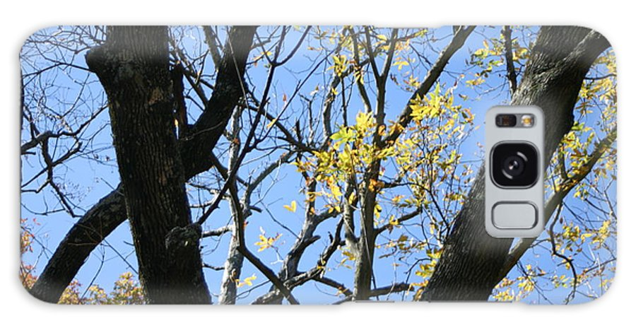 Blue Sky Galaxy S8 Case featuring the photograph For The Trees by Leann DeBord