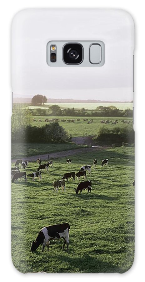 Field Galaxy S8 Case featuring the photograph Friesian Bullocks, Ireland Herd Of by The Irish Image Collection