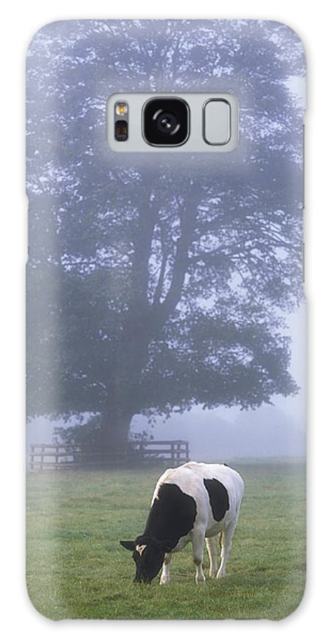 Animals Galaxy S8 Case featuring the photograph Friesian Cow, Ireland by The Irish Image Collection
