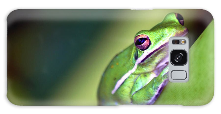 Frog Galaxy S8 Case featuring the photograph Froger by Ken Frischkorn