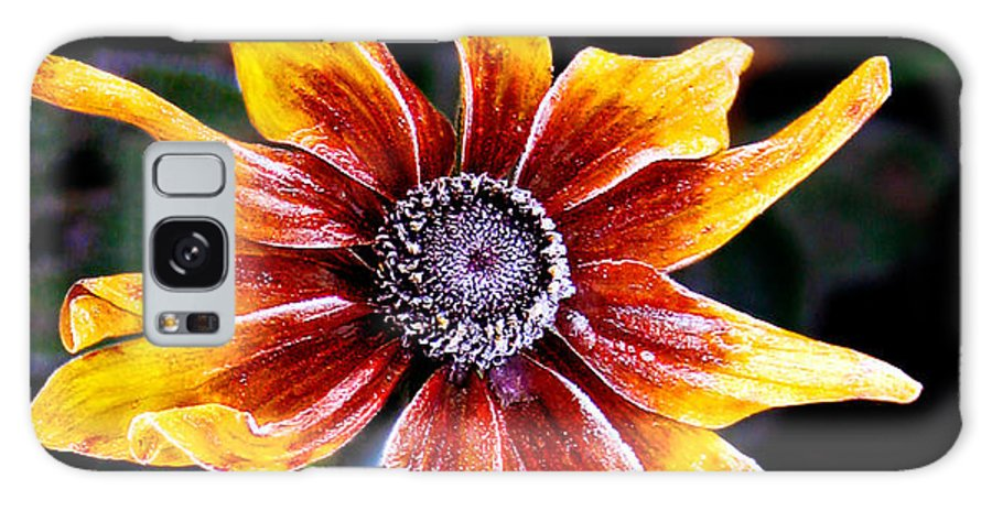 Flower Galaxy S8 Case featuring the photograph Frosty Susan by Jean Noren