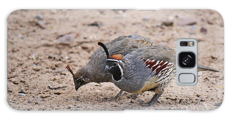 Roena King Galaxy S8 Case featuring the photograph Gambels Quail Pair by Roena King