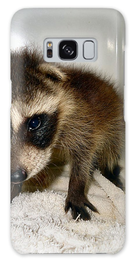 Raccoon Galaxy S8 Case featuring the photograph Gentleness by Art Dingo