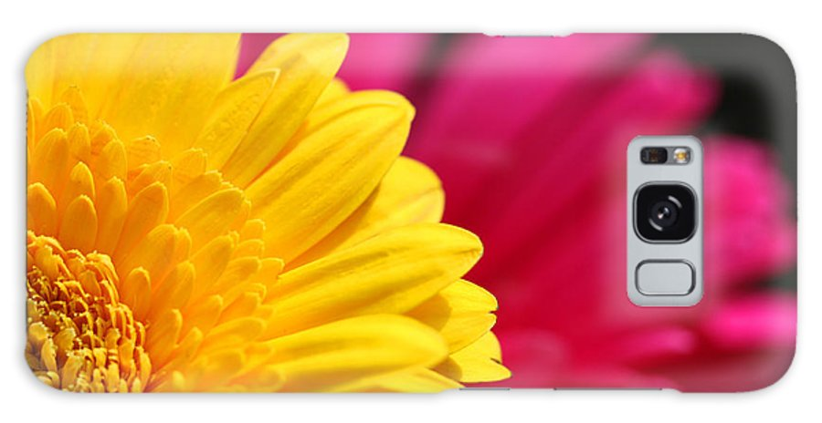 Daisies Galaxy S8 Case featuring the photograph Gerbera Daisies by Diana Haronis